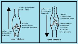 vasilinfatico