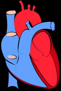 diaframma toracico